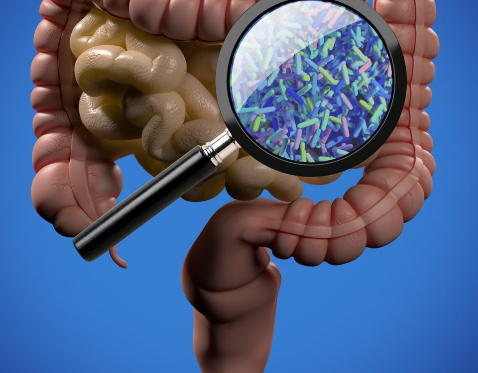Gut bacteria, microbiome. Magnification of bacteria inside the intestines, concept, representation. 3D illustration. Gut bacteria, microbiome. Magnification of bacteria inside the intestines, concept, representation. 3D illustration.